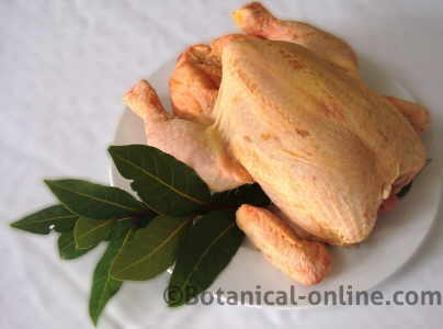 chicken with a laurel leaf