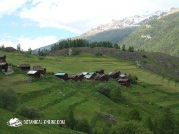 meadows on mowed terraces