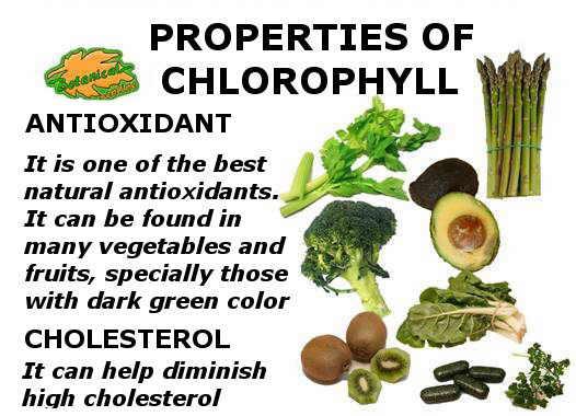 propiedades curativas de la clorofila