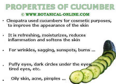 properties of cucumbers
