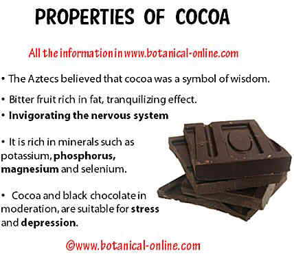 Properties of cocoa