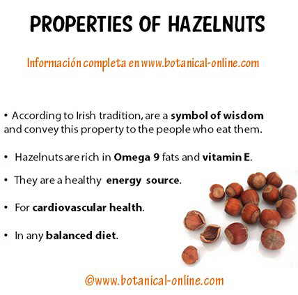 Properties of hazelnuts