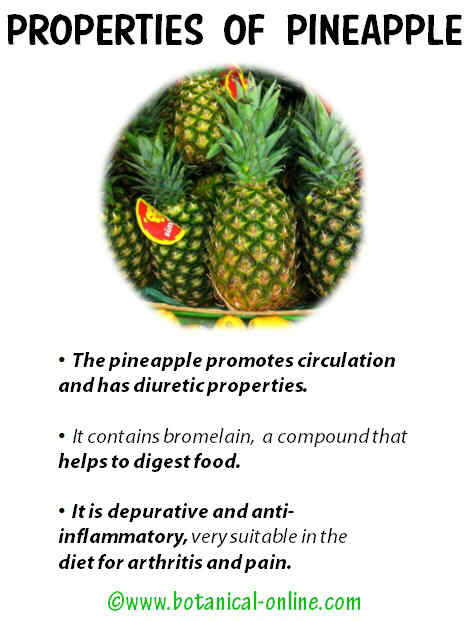 Properties pineapple