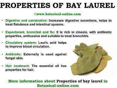 properties sweet bay