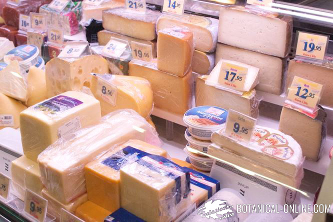 Different types of cheese and other dairy products