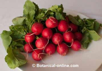 Photo of radishes
