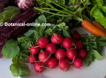 Food non suitable for people with hypothyroidism