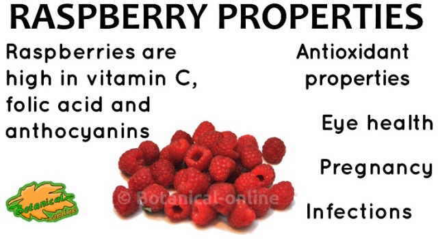 raspberry properties