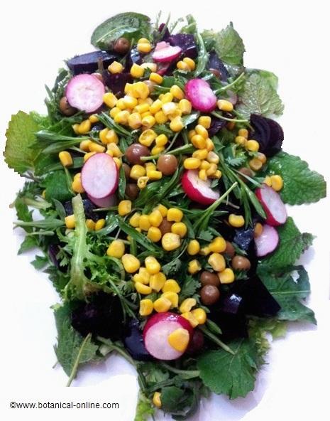 Receta rúcula, rabanitos, maíz, tomate