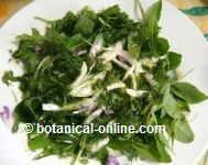 wild plant salad