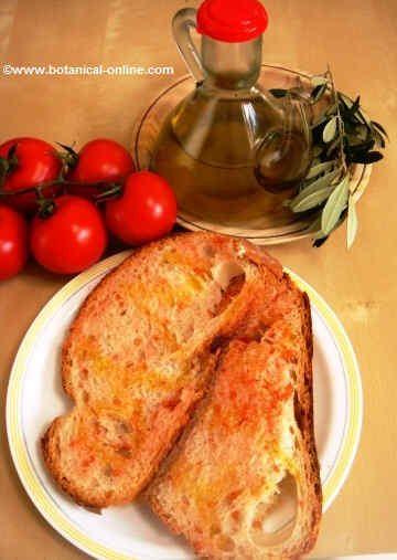 Bread, tomato and olive oil
