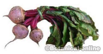 beetroot beet