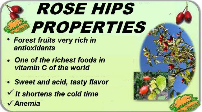 Rosehip Properties and Benefits