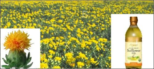 safflower, safflower field and safflower oil