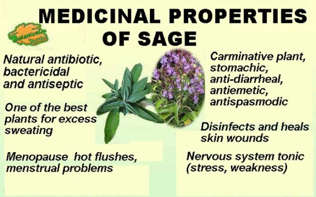 medicinal properties of sage