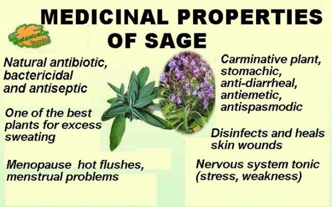 medicinal properties of sage