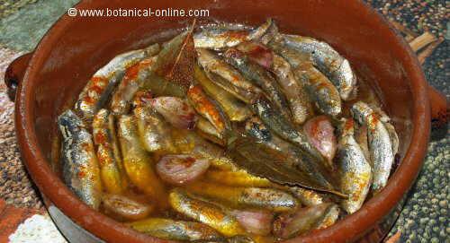 sardina escabechada