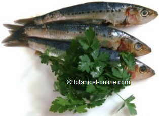 parsley with fish