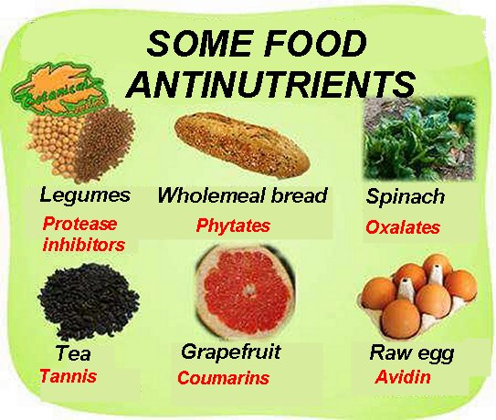 antinutrient list of foods, tannins, protease inhibitors, phytates, oxalates, tannins, Coumarins and egg avidin