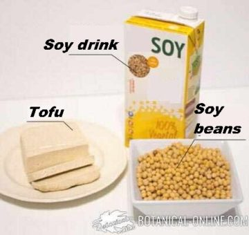 soy products: tofu, soy drink and soy beans
