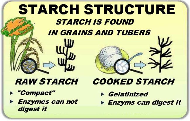 starch structure
