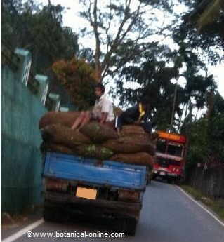 Picture a truck carrying bags of tea to the tea factory.