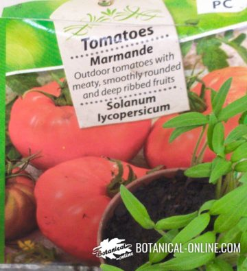 Selected tomato seeds
