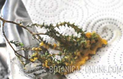 thyme in flower fried in flour