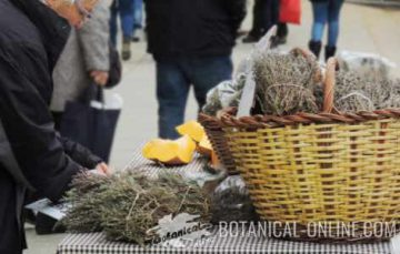 buying thyme in a street market