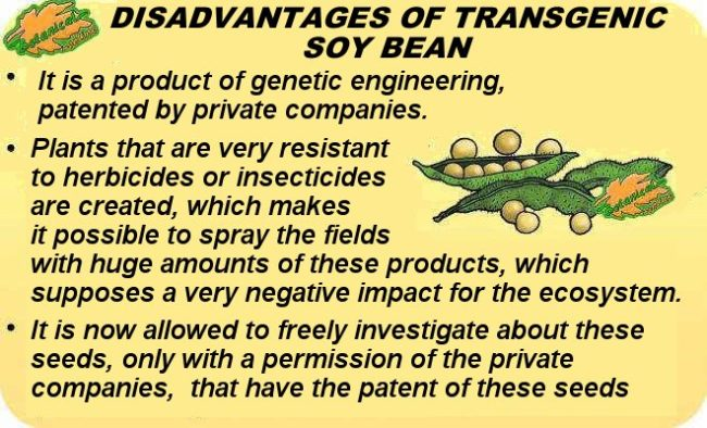 disadvantages of transgenic soy bean