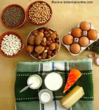 Dairy products, eggs, legumes and nuts