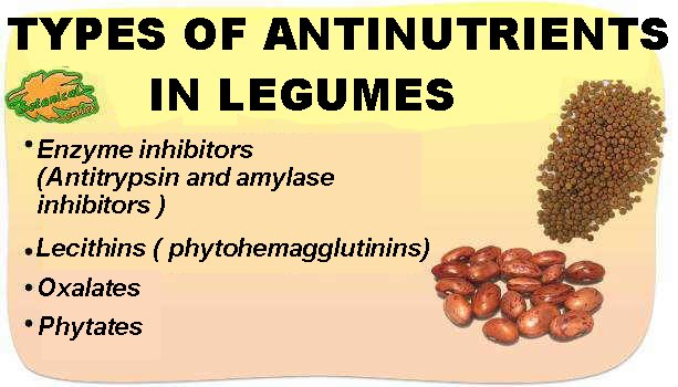 Types of antinutrients in legumes
