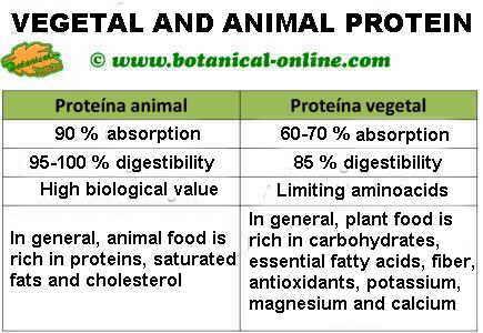 Diferencias entre la proteína animal y vegetal, vegetarianismo