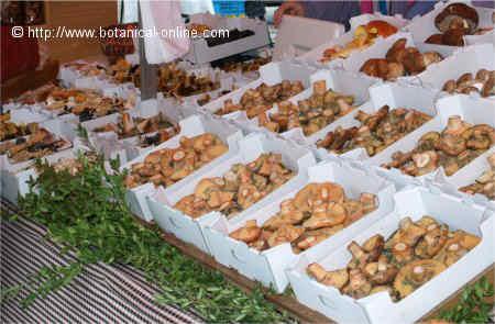 edible mushrooms in a market