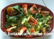 Letuce salad with purslane