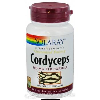 Comprar Cordyceps sinensis 60 cápsulas - Propiedades y usos