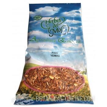 Comprar yemas de pino ecológicas a granel para infusiones
