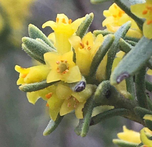 Flor concurso marzo de 2020