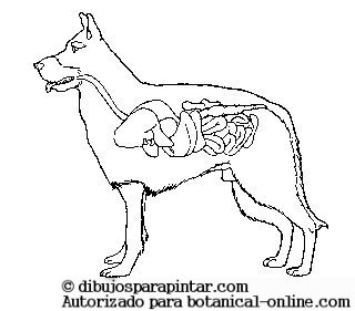 Sistema Digestivo De Los Animales Botanical Online