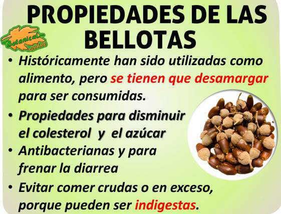 Propiedades medicinales alimentarias de las bellotas