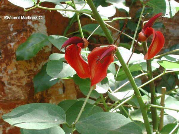 flor de coral