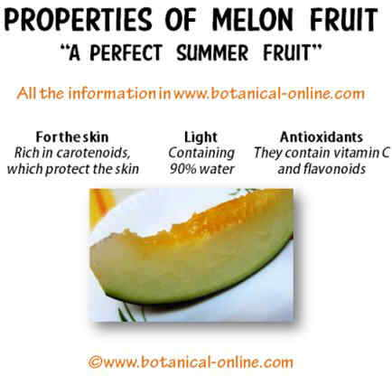melon properties