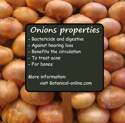 Onion properties