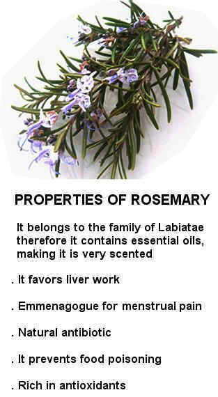 Rosemary properties