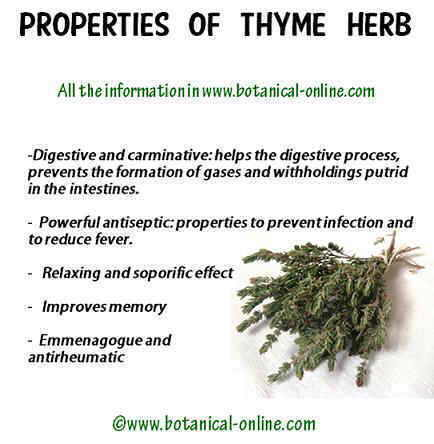 Medicinal properties of thyme