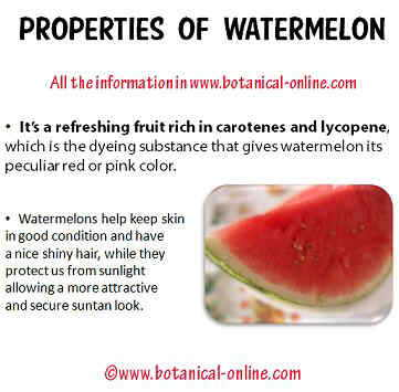 Properties of watermelon