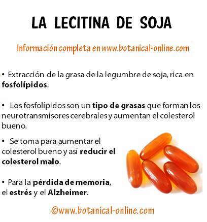 Propiedades de la lecitina de soja