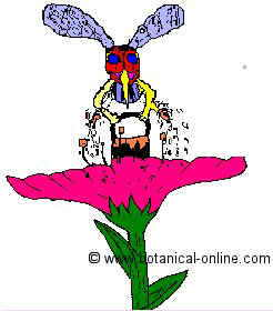 dibujo de una abeja recogiendo el nectar de una flor