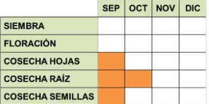 Calendario de cultivo de la acedera