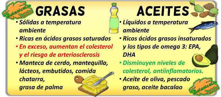 diferencias aceites de origen animal y grasas animales caracteristicas propiedades